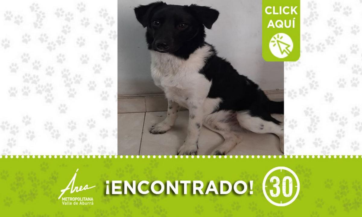 Buscan a la familia de este perrito encontrado en Sabaneta