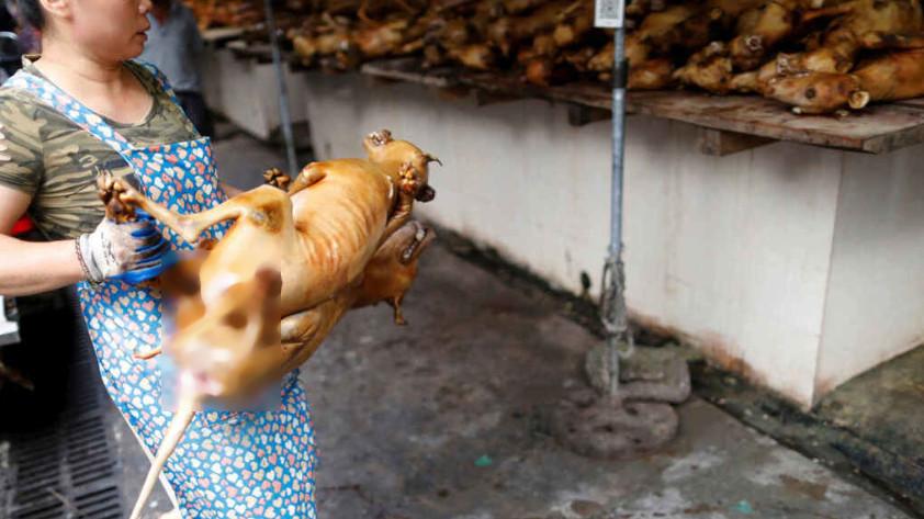 China-festival-carne de perro