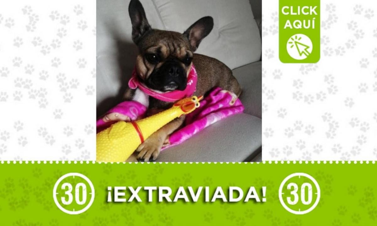 """""""Taira"""" se extravió en San Antonio de Prado ¿La ha visto?"""