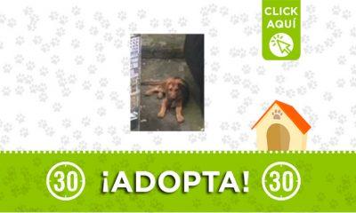 perrito-Envigado-adopción