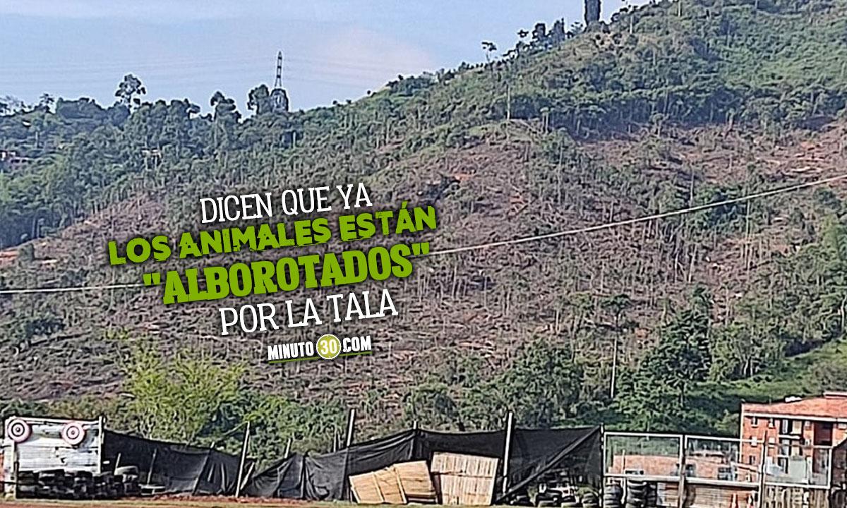 Denuncia tala masiva de árboles en Rodeo Alto