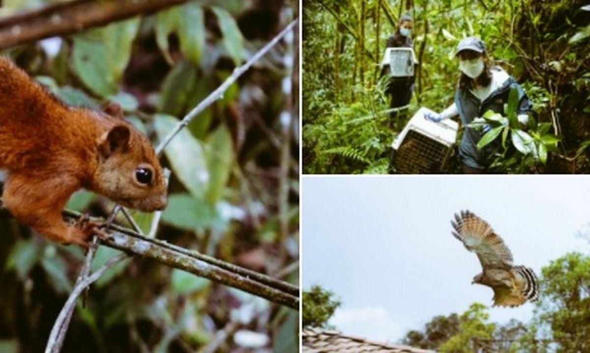 38 animales regresaron a su hábitat natural en Sabaneta