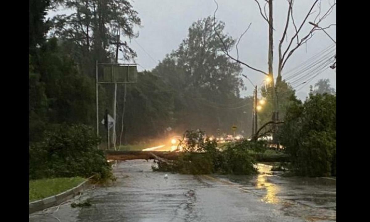 En Rionegro se cayeron un árbol y un poste de energía
