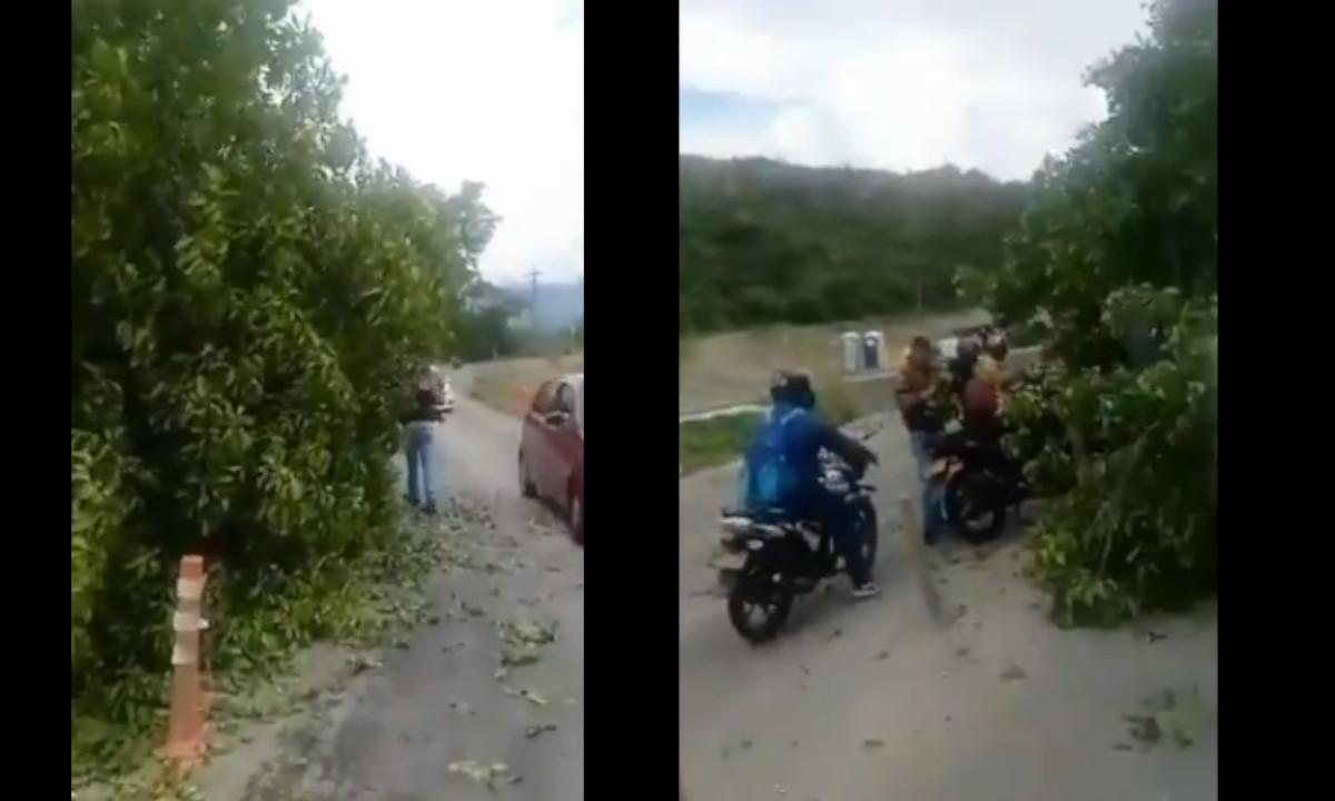 Cayó un árbol en la vía a Santa Fe y los conductores no huyeron, lo rodearon