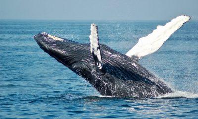 ballena-pescador