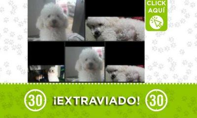 castilla perro 14 junio