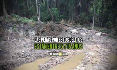 Aprueban proyecto para crear seis nuevos delitos ambientales