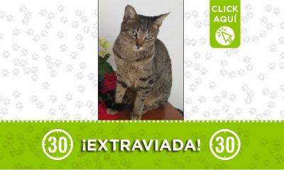 Esta gatica se perdió en el Barrio El Salvador