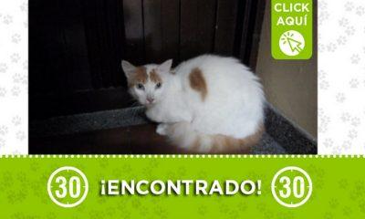 Este gatico fue encontrado en Manrique ¿Es suyo?