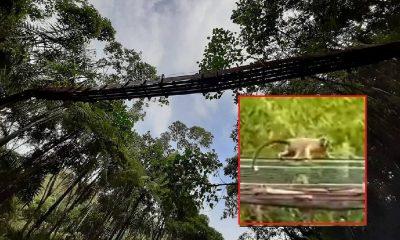 Instalan un nuevo 'Paso Seguro de Fauna' en Antioquia