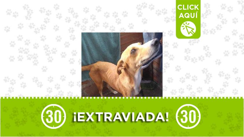 Clarita-San Javier