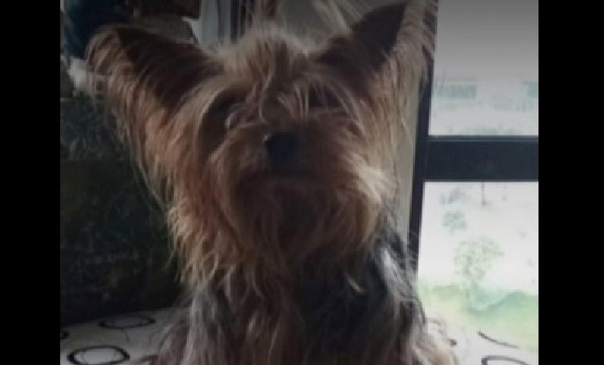 Perrita murió electrocutada en un poste en Bogotá