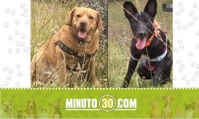 perritos perdidos en Santa Elena