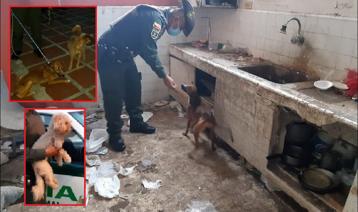 Rescataron a tres perritos en pésimas condiciones en Cali