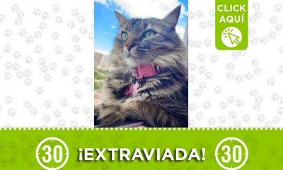 tequila bello gata