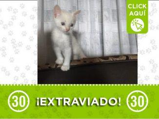 Charly perdido gato