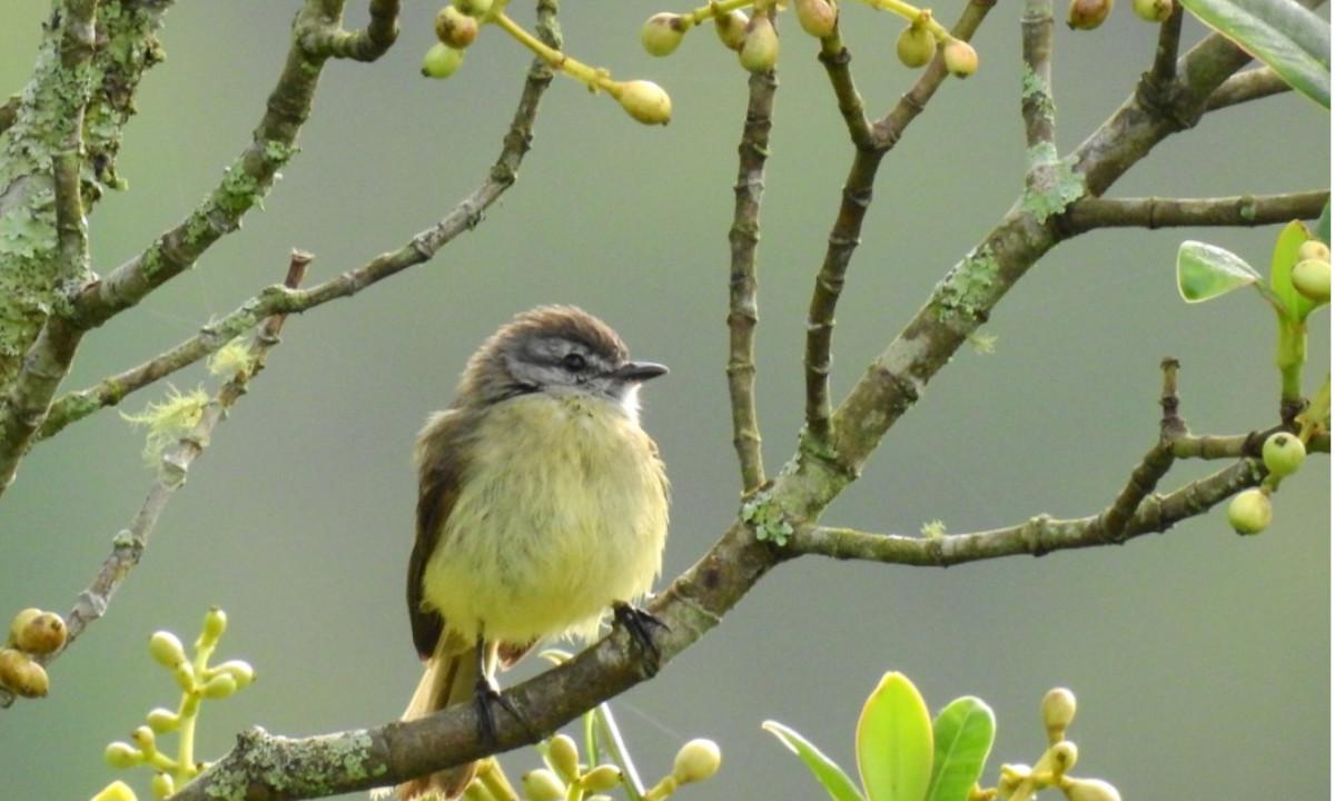 ¡Qué belleza! Vieron ocho especies nuevas en Alto de San Miguel de Medellín