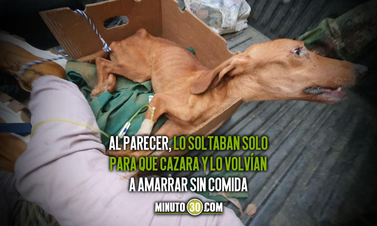 Que crueldad tenian un perrito amarrado a un palo y sin comida en Cocorna