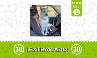 Santa Elena-perro-extraviado