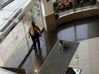 Enternecedor: En medio de un aguacero un vigilante le dio refugio a un perrito