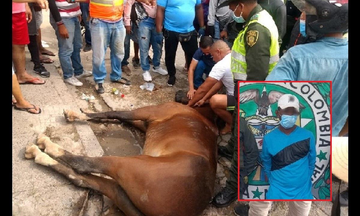 Caballo murió en Cartagena al galopar 23 km atado a moto