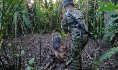caleta perros antiexplosivos