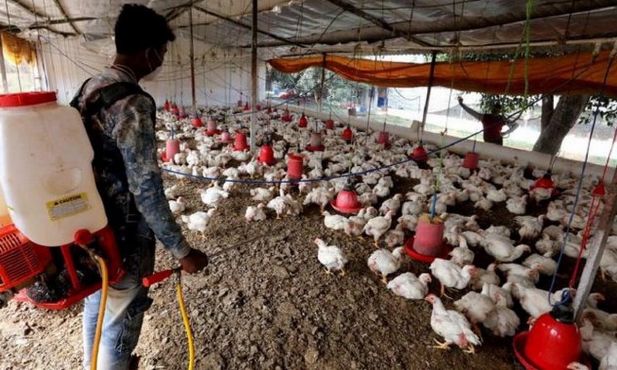 cepa H5N6 gripe aviar