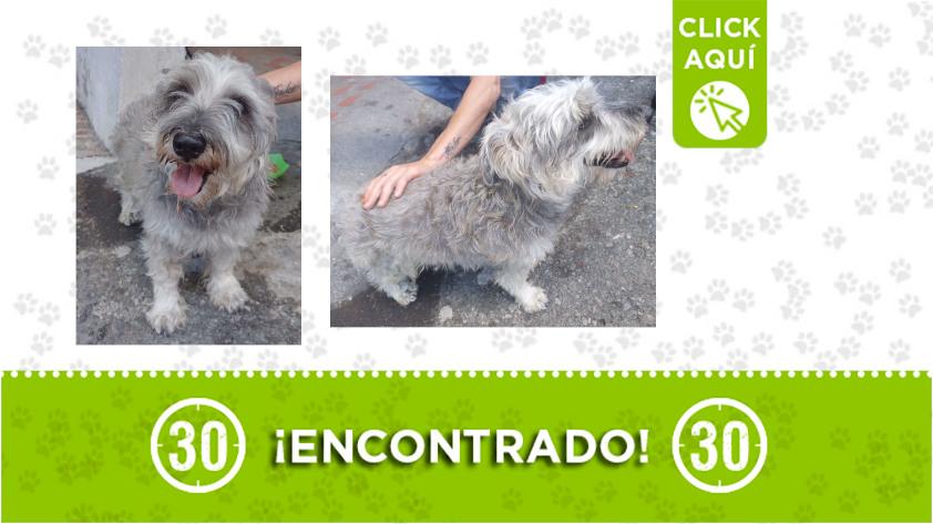 Castilla-perro-encontrado