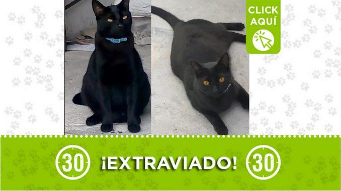'Fénix' se perdió por el barrio Metropolitano La Pradera