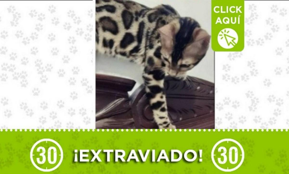 gatica extraviada manrique 15 julio