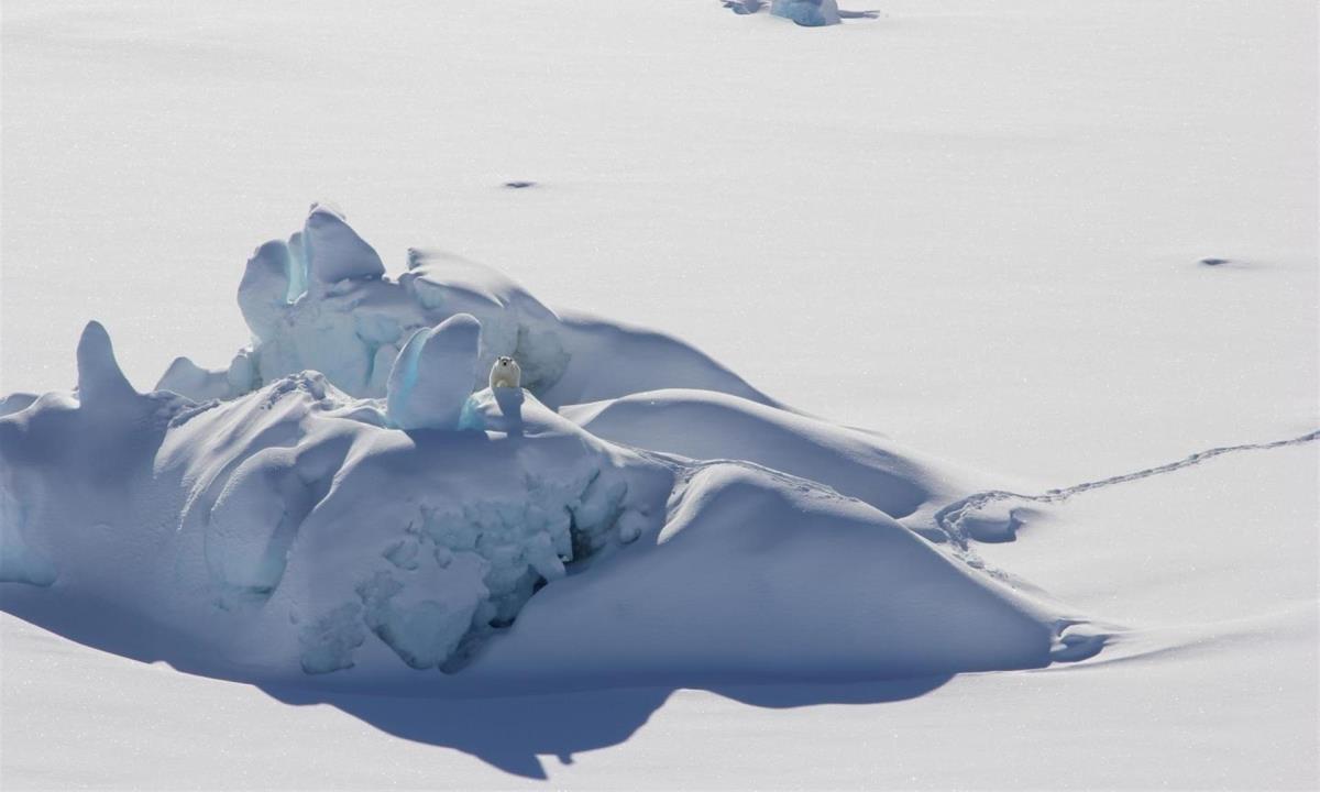 hielo polo artico