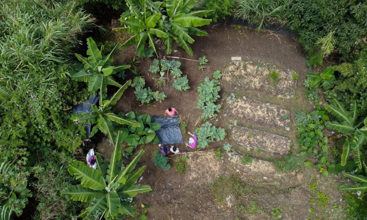 ¡Tan lindas! 33 Madres de La Candelaria tienen huertas en los patios de sus casas