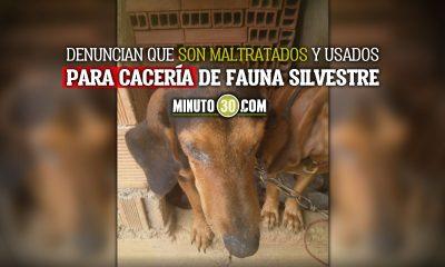 Piden al alcalde de Cocorná intervención por maltrato animal