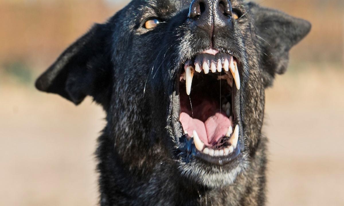 niña-atacada-perros