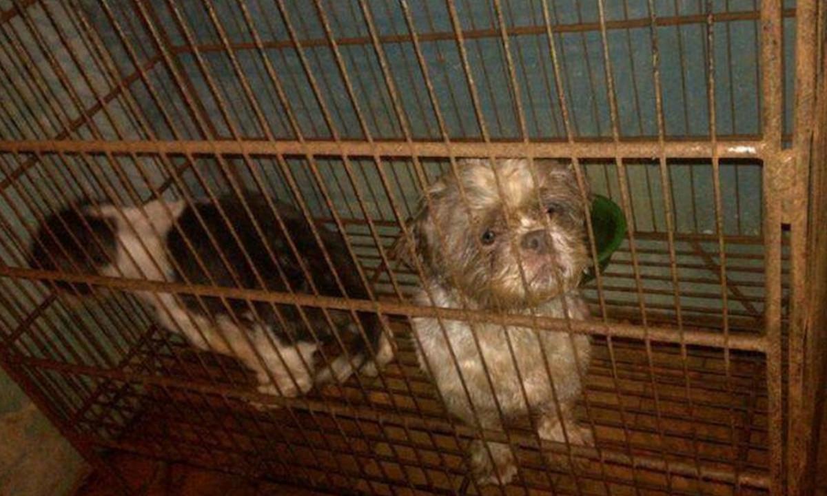 Judicializan a dueño de veterinaria que tendría 44 perritos sin agua, sin comida y en mal estado de salud