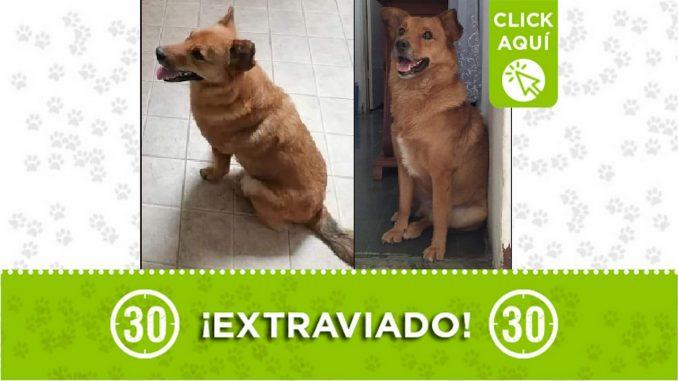 Este perrito se perdió por el parque de estación Floresta-Calasanz