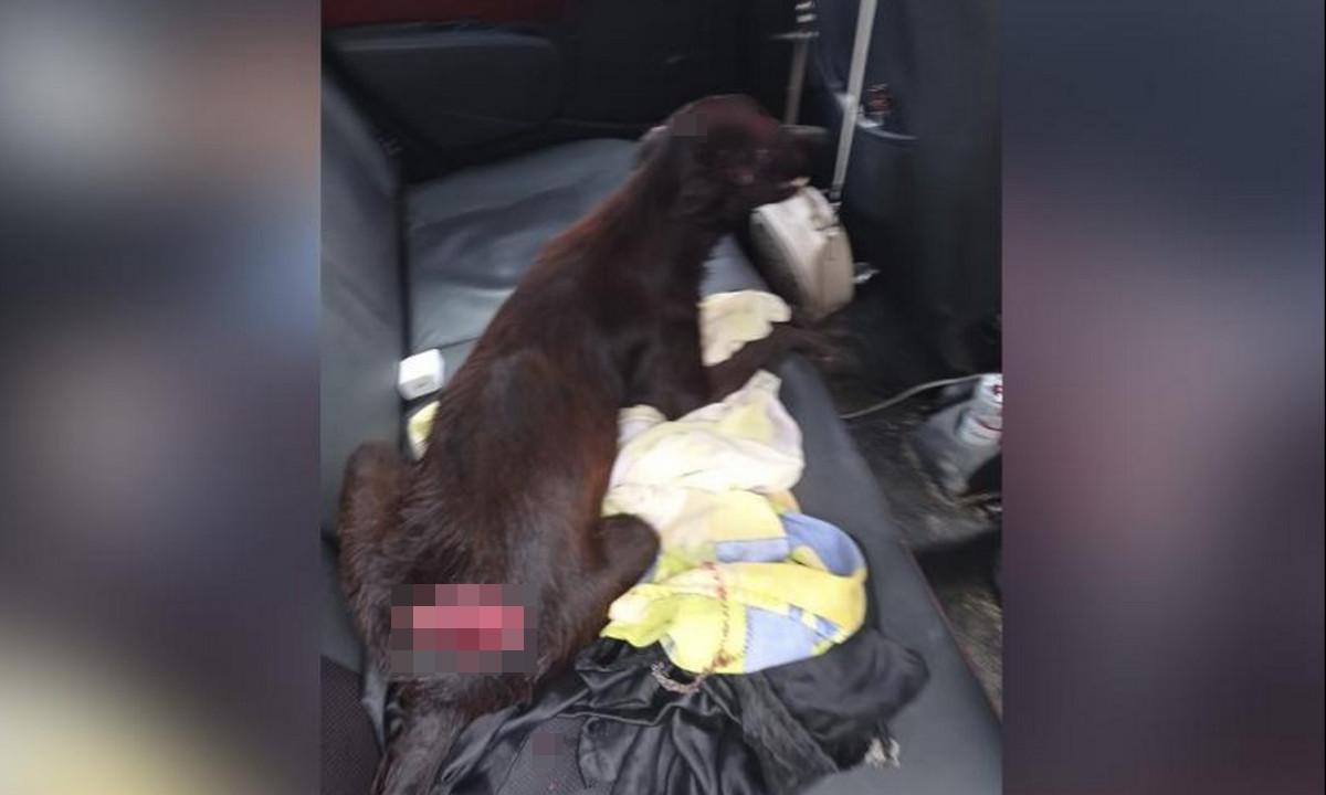 A machetazos atacaron a un perrito en Barranquilla