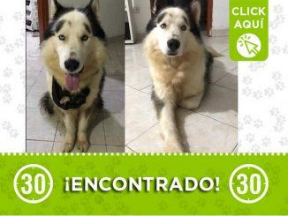 Buscan a los dueños de este perrito encontrado en el parque San José de Envigado