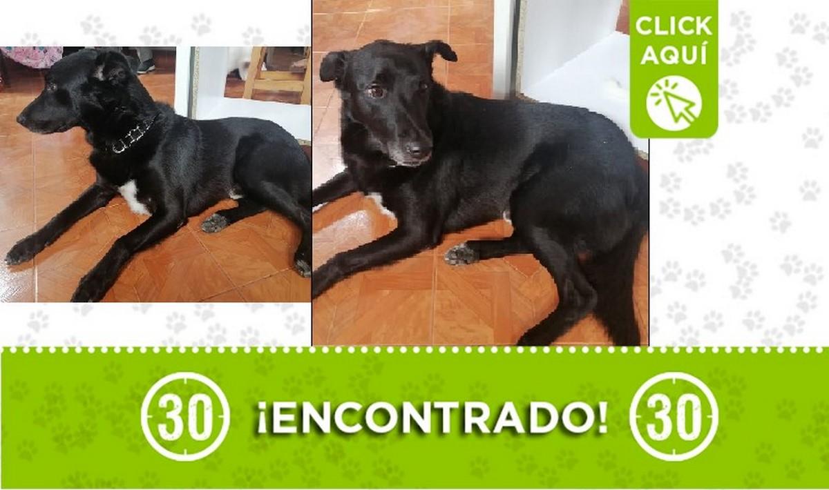 Perrito encontrado por Unicentro, buscan a dueños o un hogar