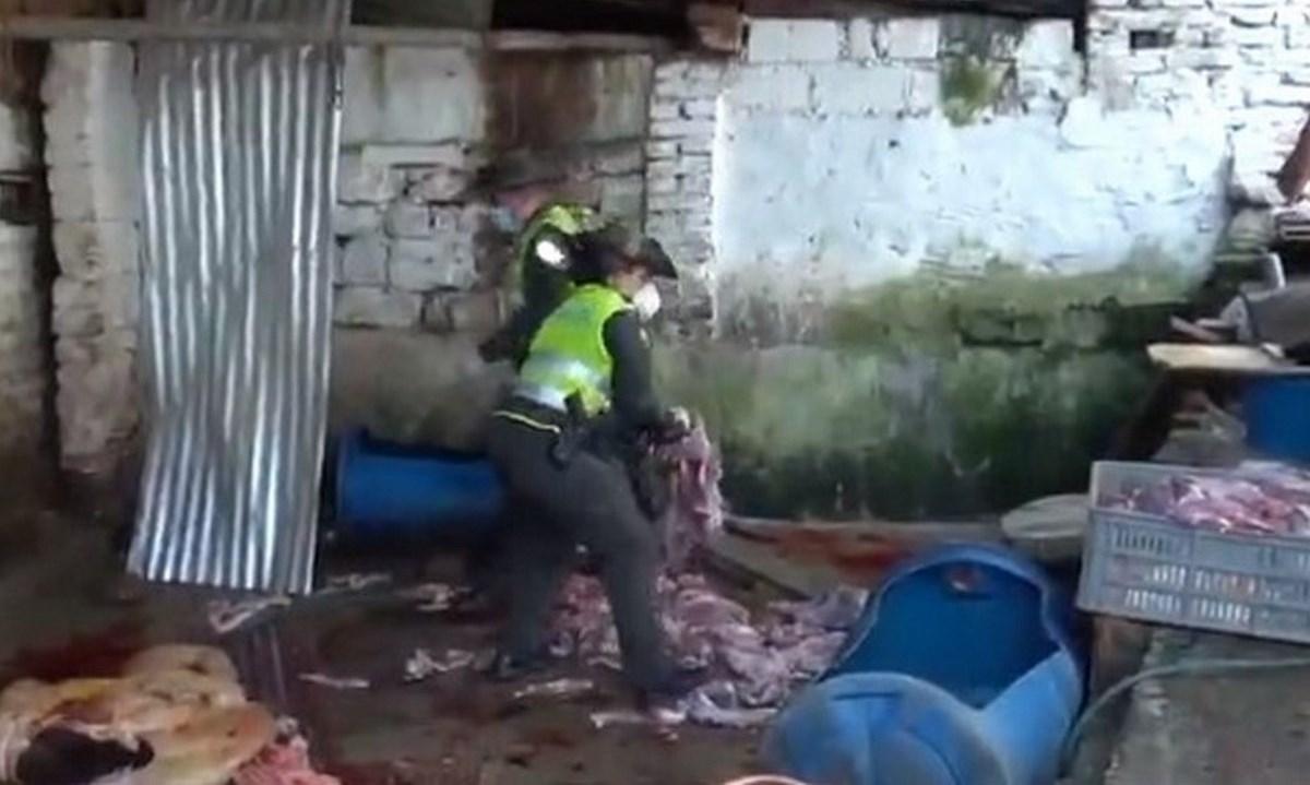 policia carne caballo