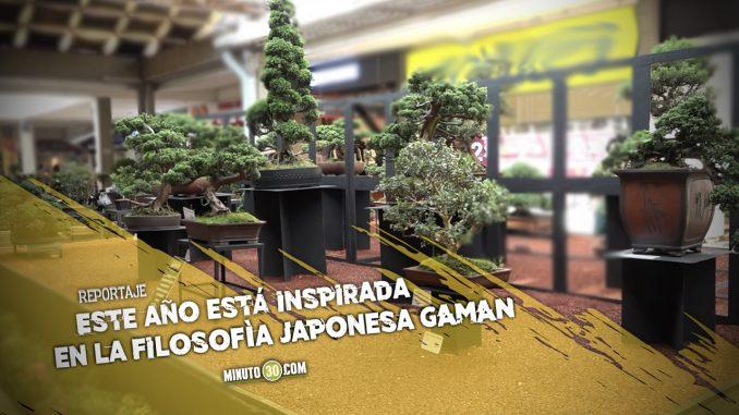 Exposición Bonsái en Medellín