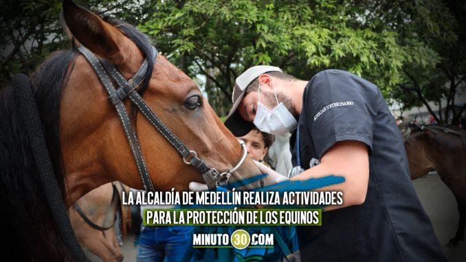 [Video] ¡Qué maravilla! Equinos en Villa Hermosa y Carabobo Norte recibieron atención veterinaria