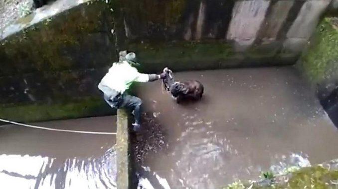 Los aullidos de un perrito que cayó en un río permitieron que fuera rescatado