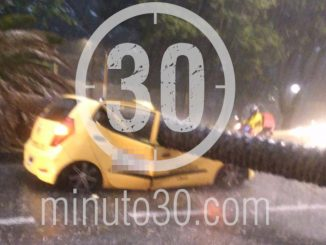 ¡Qué miedo! Un árbol cayó sobre un taxi en la Avenida Barranqui