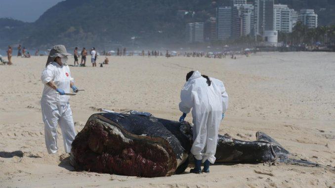 ballenas brasil