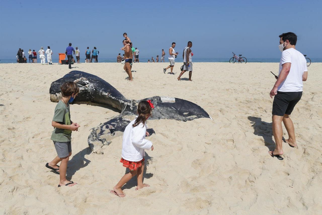 ballenas brasil3