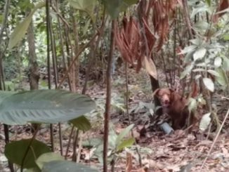 Ejército neutraliza acción terrorista en Norte de Santander, destruyeron artefacto explosivo improvisado