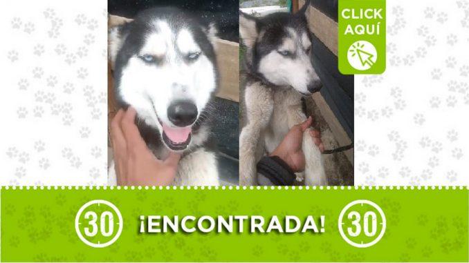 Buscan a los dueños de esta perrita encontrada en Santa Elena