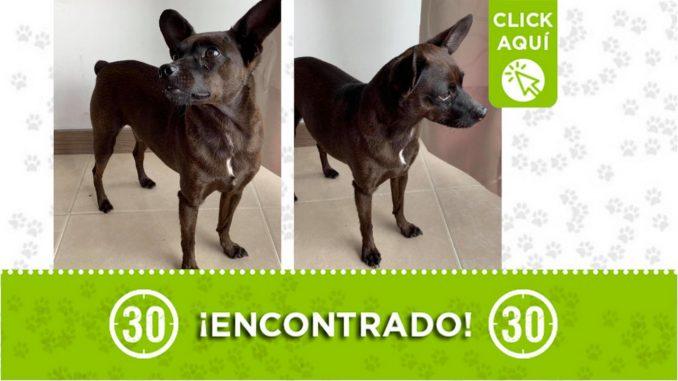 Buscan a la familia de este perrito encontrado en Itagüí