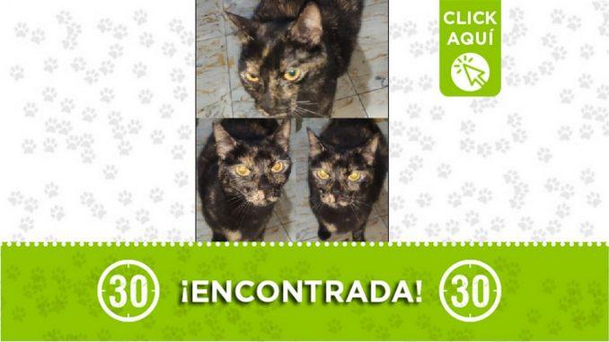 Buscan a los dueños de esta gatica encontrada en el barrio San Pío de Itagüí